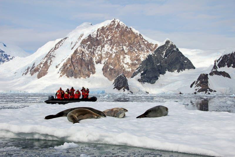 充分可膨胀的小船游人,注意鲸鱼和封印,南极半岛 免版税库存图片