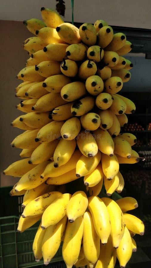 充分地riped香蕉群 库存图片