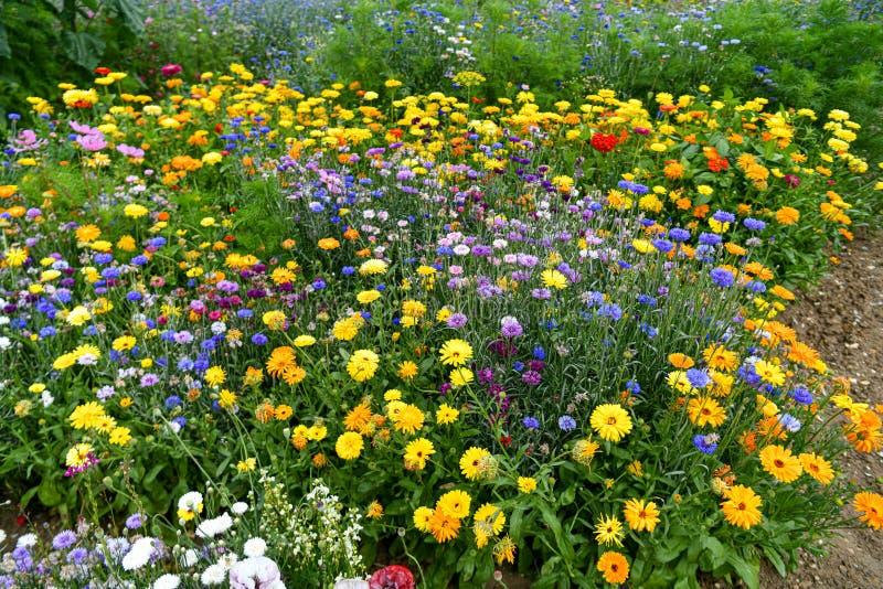 充分庭院蜂、蝴蝶和其他昆虫的花 免版税库存图片