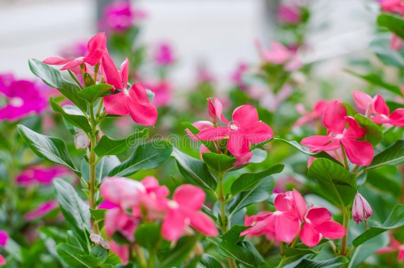 充分开花的花木头 免版税库存图片