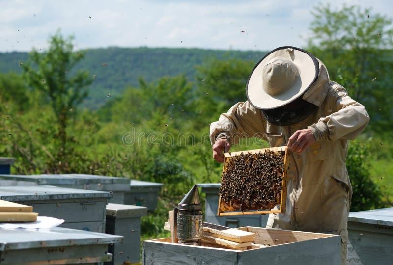 充分拿着蜂窝蜂的人 检查框架的防护工作服的蜂农在蜂房 图库摄影