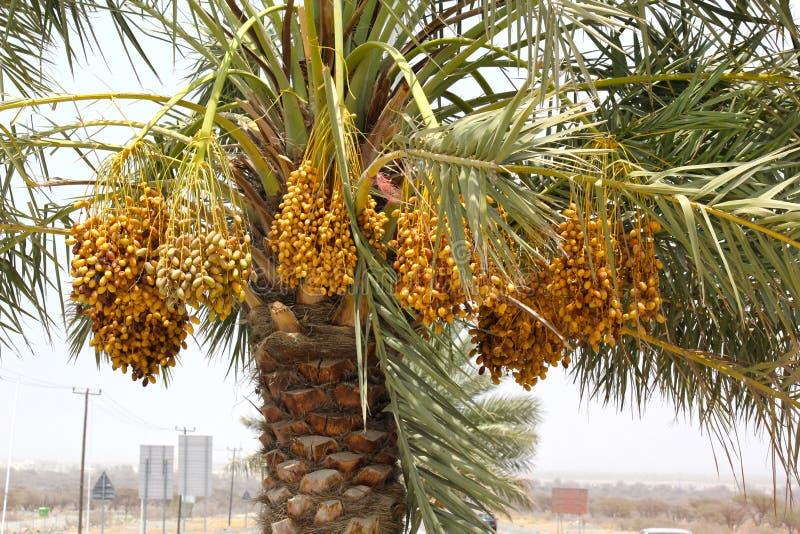 充分捆成一束在枣椰子的成熟的日期在迪拜街道, 2017年6月26日的阿拉伯联合酋长国 免版税库存照片