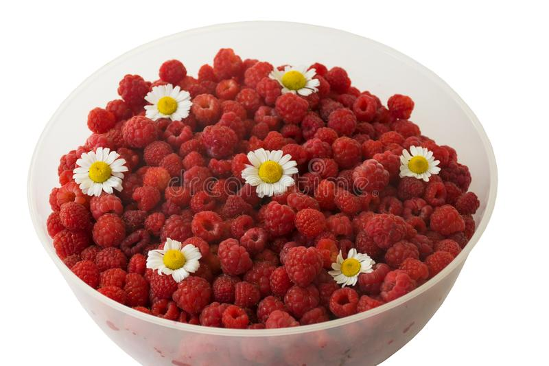 充分杯子红草莓 反对寒冷的莓果 春黄菊花 免版税库存图片