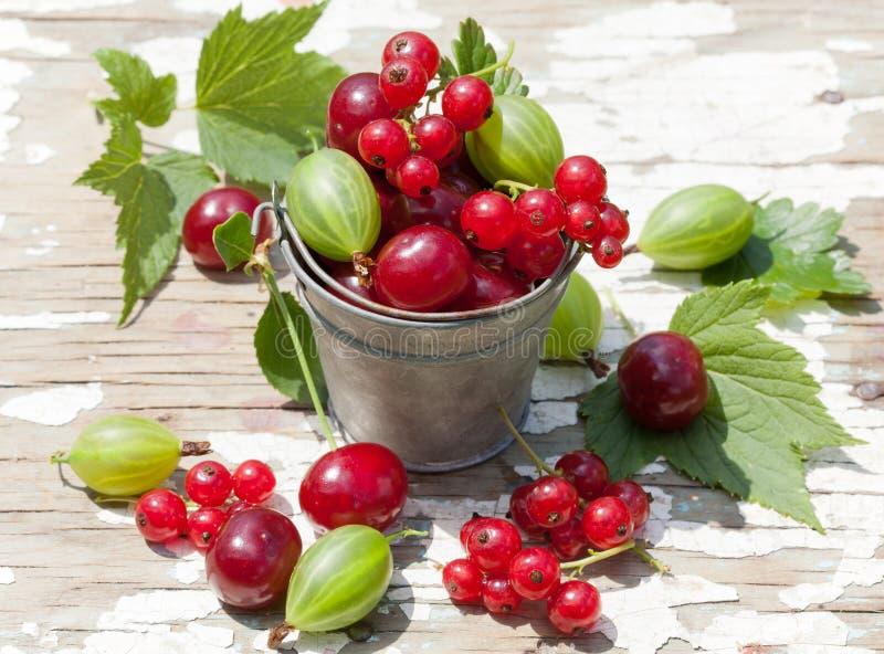 充分桶莓果 免版税库存图片