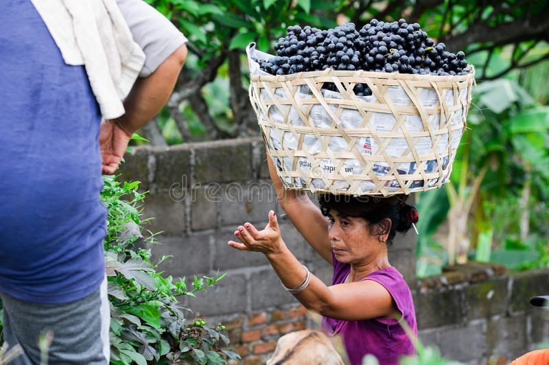 充分汽车的妇女葡萄在巴厘岛,印度尼西亚 库存图片