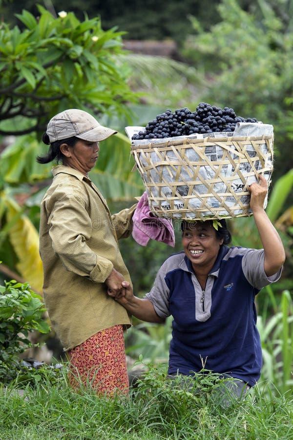 充分汽车的妇女葡萄在巴厘岛,印度尼西亚 库存照片