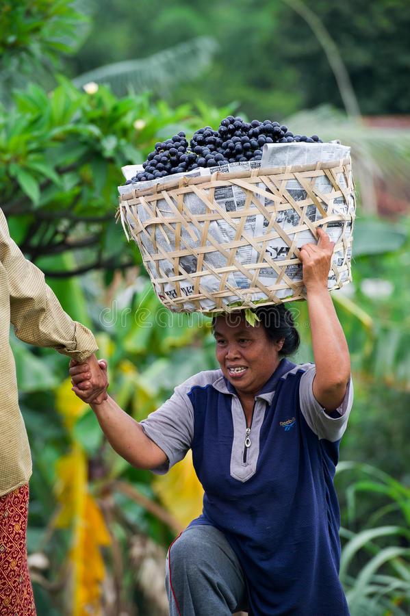 充分汽车的妇女葡萄在巴厘岛,印度尼西亚 免版税库存图片