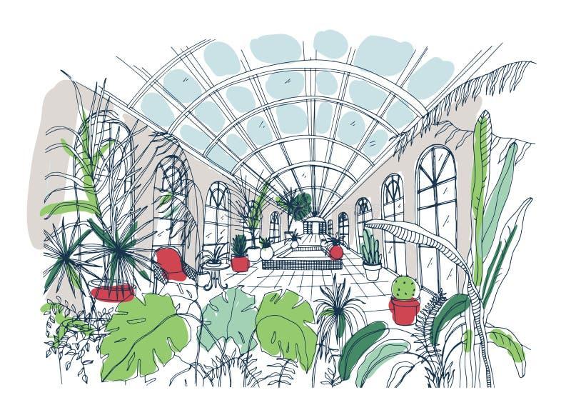 充分温室内部徒手画的剪影热带植物 玻璃温室五颜六色的图画有棕榈的,异乎寻常 库存例证