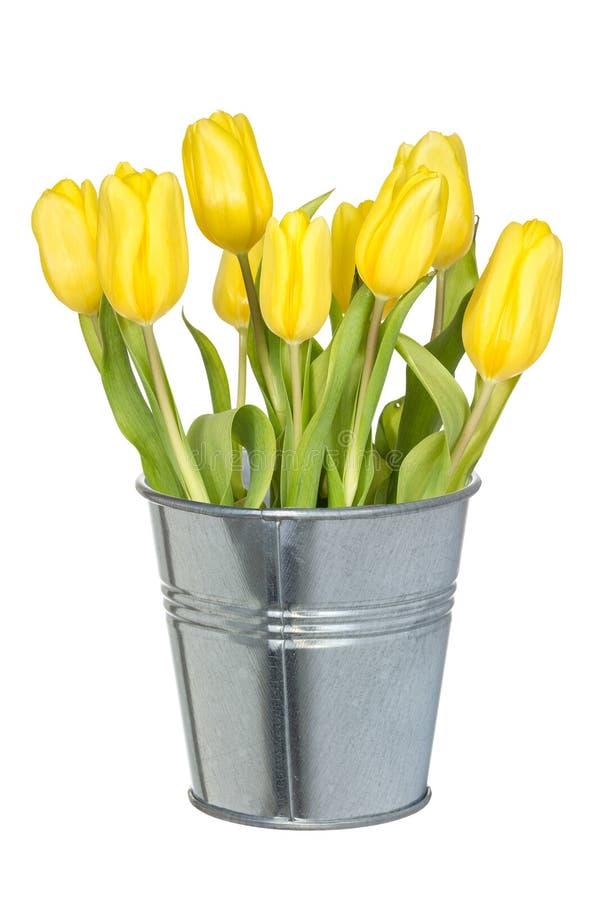 充分的桶黄色郁金香 免版税库存图片