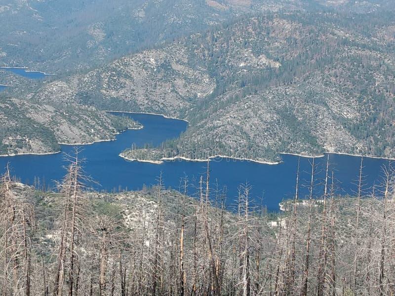 充分的湖,死的树 库存照片