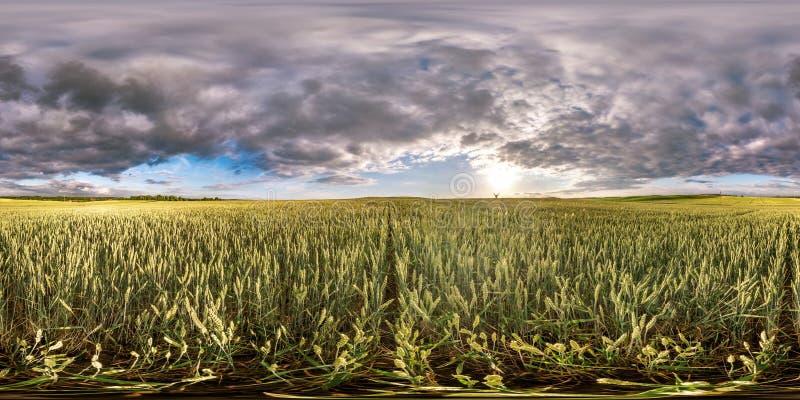 充分的球状无缝的hdri全景360度在黑麦和麦田中的角度图在夏天与令人敬畏的晚上日落 库存照片