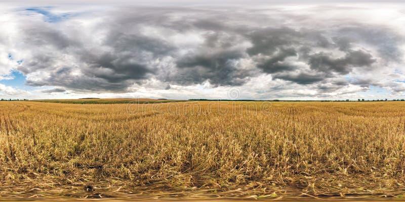 充分的球状无缝的hdri全景360度在黑麦和麦田中的角度图在夏天与令人敬畏的晚上日落 库存图片
