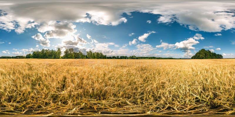 充分的球状无缝的hdri全景360度在黑麦和麦田中的角度图在夏天与令人敬畏的晚上日落 免版税库存图片