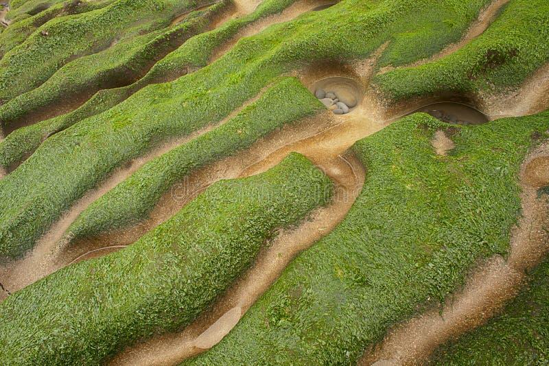 充分的绿色岩石海岸海草 库存图片