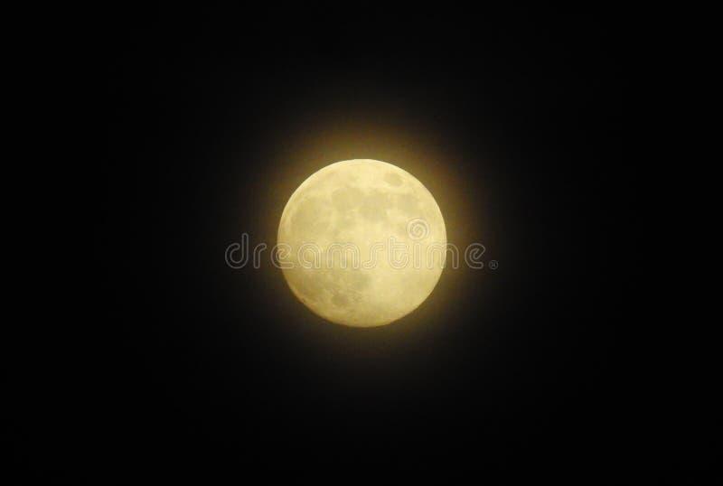 充分的金黄月亮 图库摄影