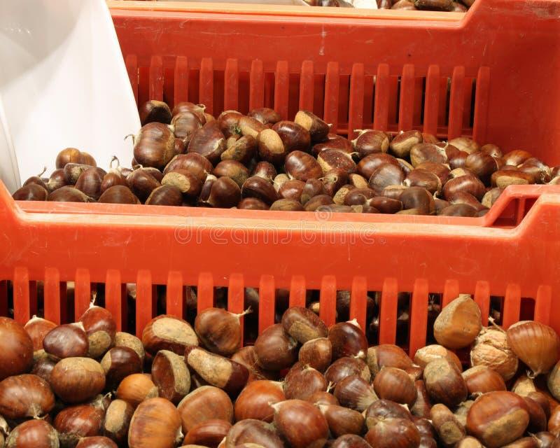 充分箱成熟栗子在批发果子3月的待售 库存图片