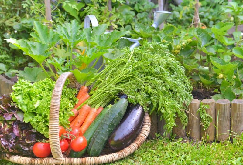 充分篮子新鲜蔬菜在庭院里 免版税库存图片