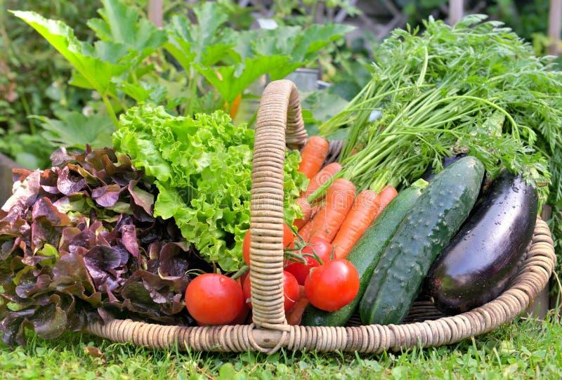 充分篮子新鲜蔬菜在庭院里 免版税图库摄影