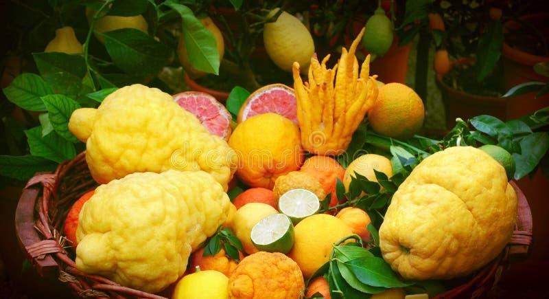 充分篮子柑橘水果 免版税库存图片