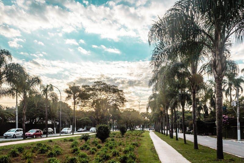 充分巴西街道热带树在圣保罗& x28; 圣保罗 免版税库存照片