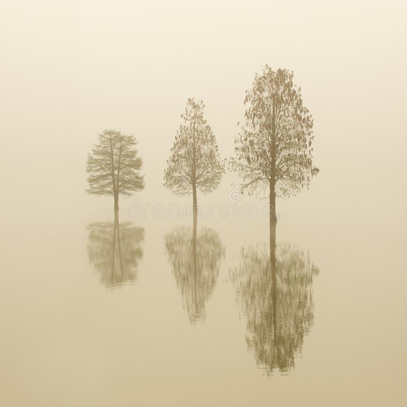 充斥在雾的三棵偏僻的树在日出 平稳的水 免版税库存照片