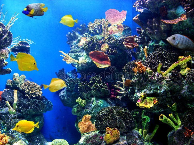 充满活力水族馆五颜六色的寿命 免版税库存图片
