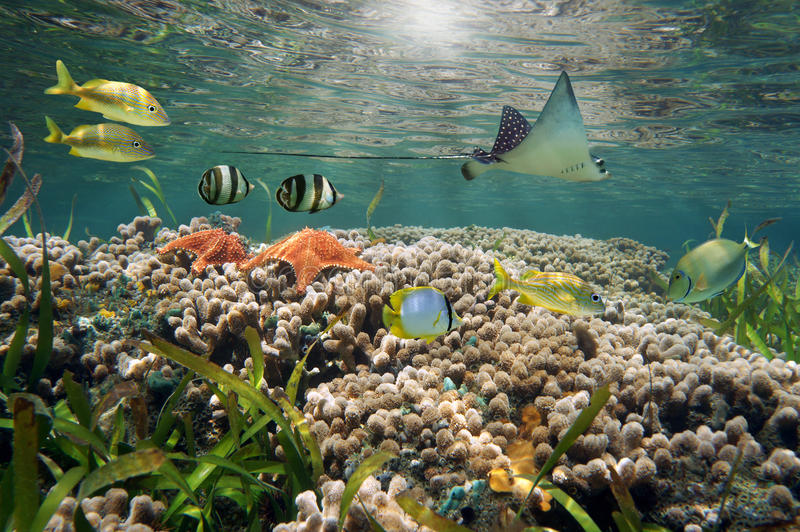 充满活力的海洋生活和珊瑚礁 库存照片
