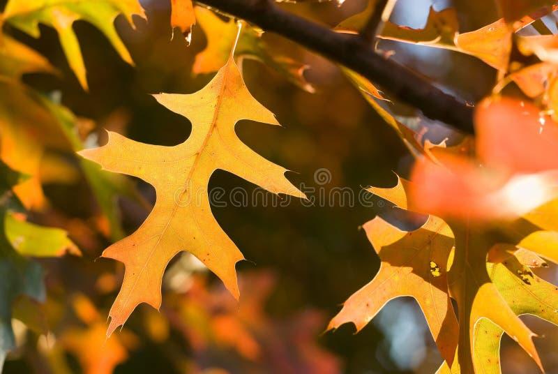 充满活力的秋叶 免版税库存照片