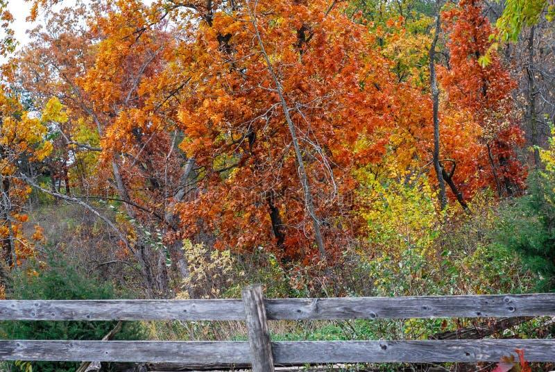 充满活力的铁锈上色了与老篱芭的秋天树 图库摄影