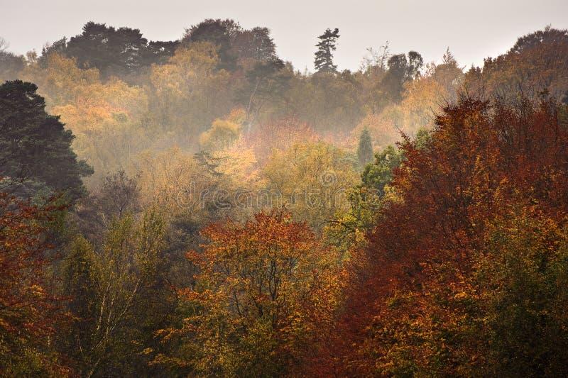 充满活力秋天美好的秋天森林的横向 免版税库存图片