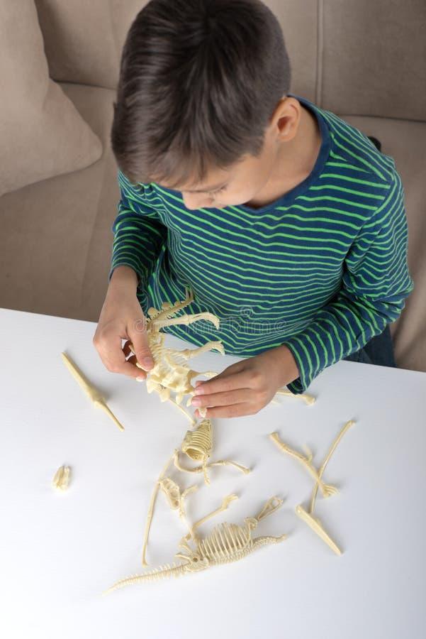 充满热情的男孩收集恐龙的骨骼 免版税库存照片