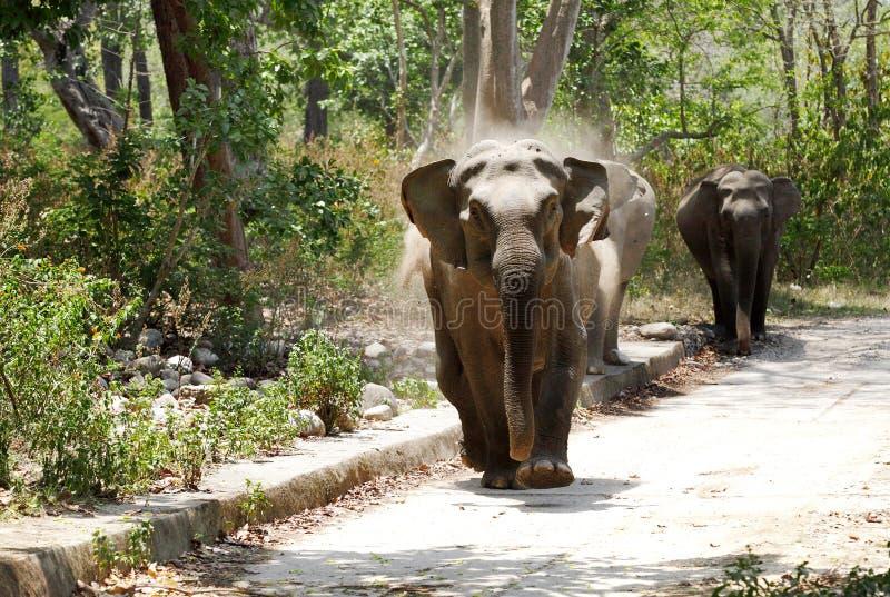 充电在徒步旅行队吉普的大象 免版税库存图片