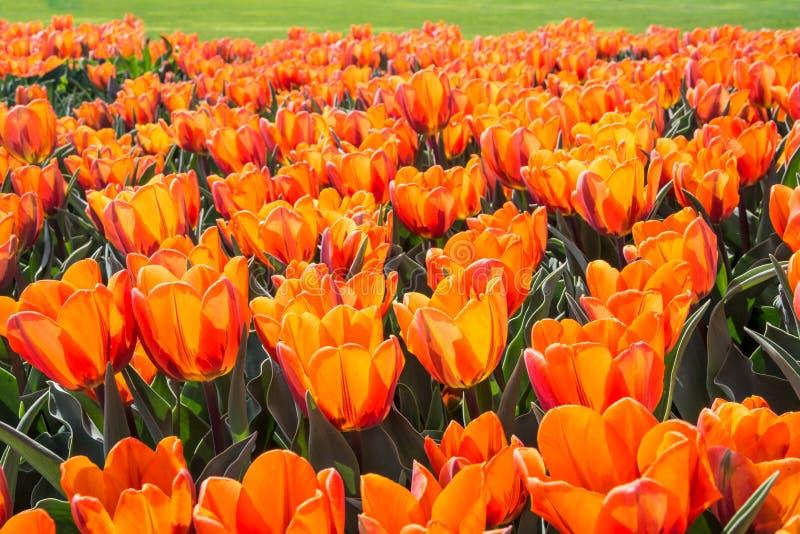 充满活力的春天颜色 免版税库存照片