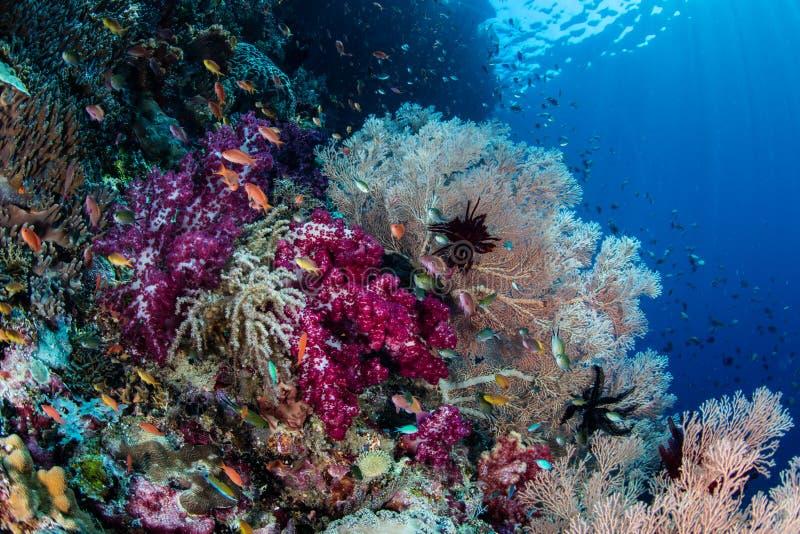 充满活力的珊瑚礁生物多样性 免版税库存照片