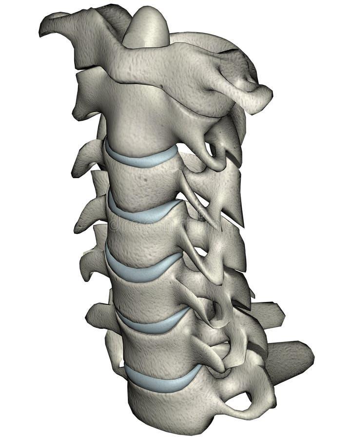先前子宫颈人力脖子倾斜脊椎 皇族释放例证