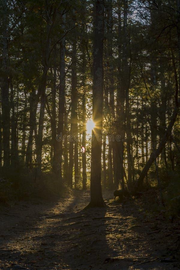 光亮的太阳在森林里 免版税库存照片