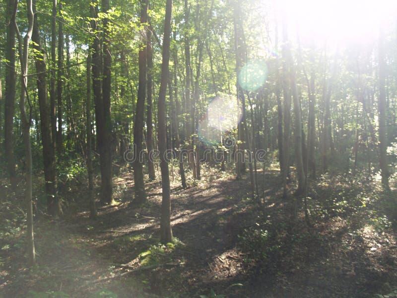 光亮的星期日结构树 免版税库存照片