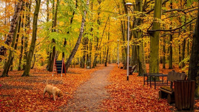 光亮秋季颜色令人惊讶的公园  免版税库存图片