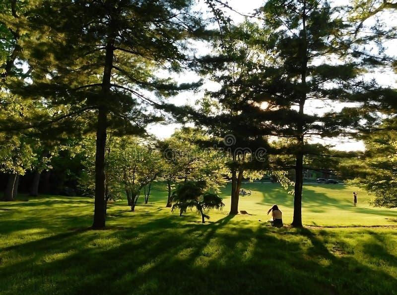 光和阴影在公园 库存图片