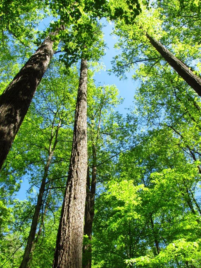 光和阴影在森林里 免版税库存照片