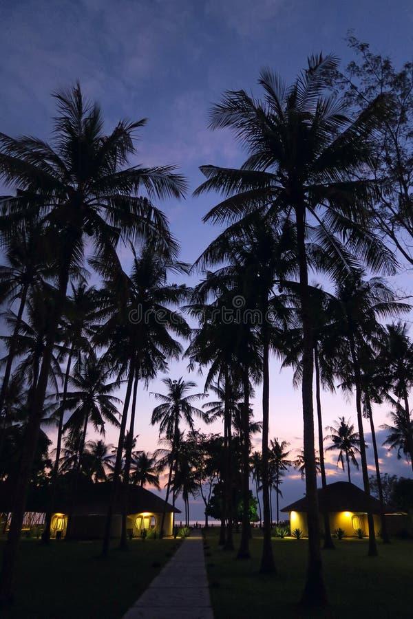 光在小的小屋窗口里在日落天空背景的棕榈树森林里 免版税图库摄影