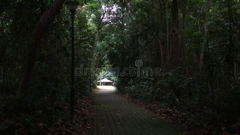 光在黑暗的森林里 库存图片