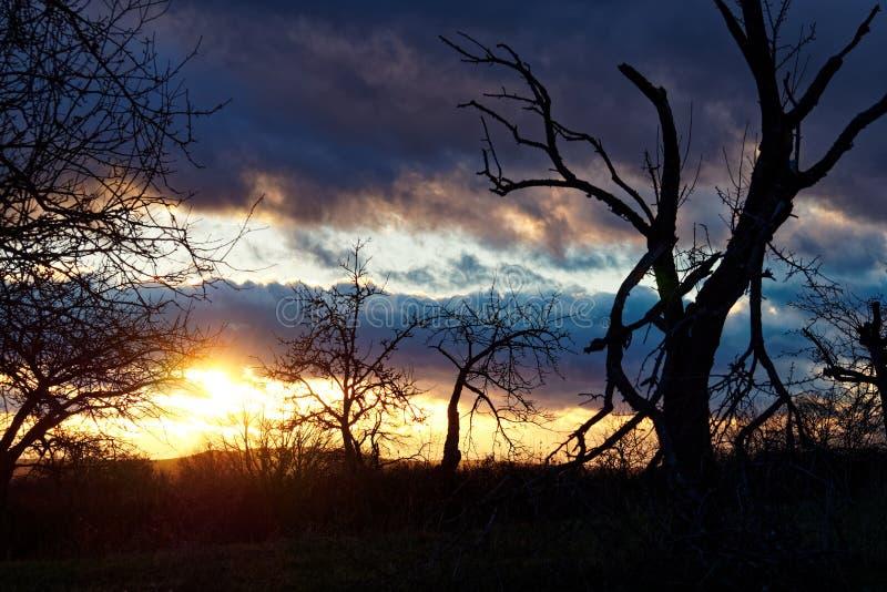 光彩的冬天日落 图库摄影