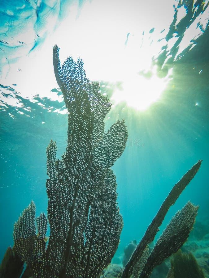 光束和爱好者珊瑚库拉索岛景色 免版税库存图片