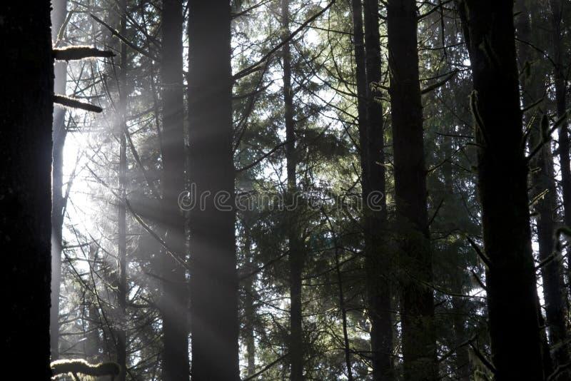 光束结构树 免版税库存照片