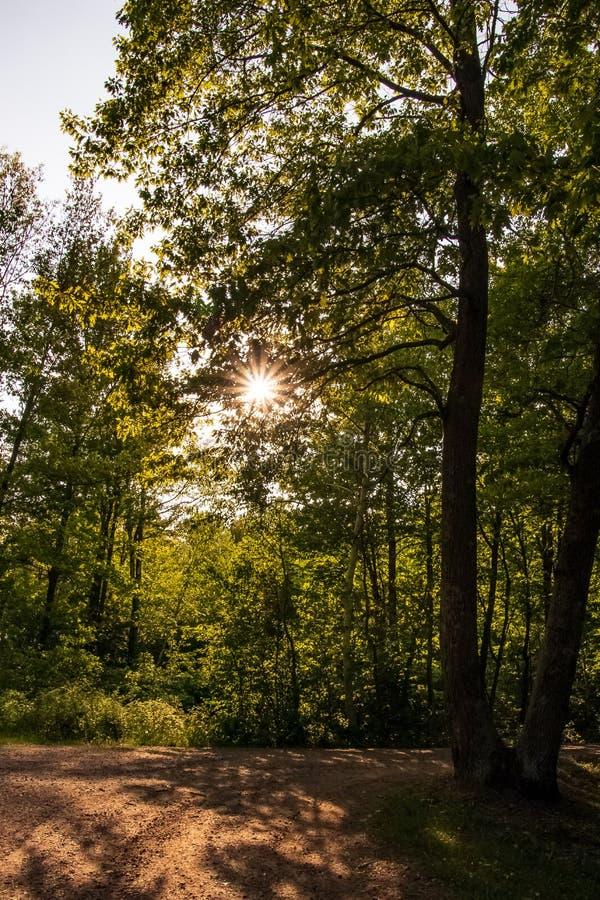 光束通过在一条土路的树偷看在北部森林的森林里 图库摄影