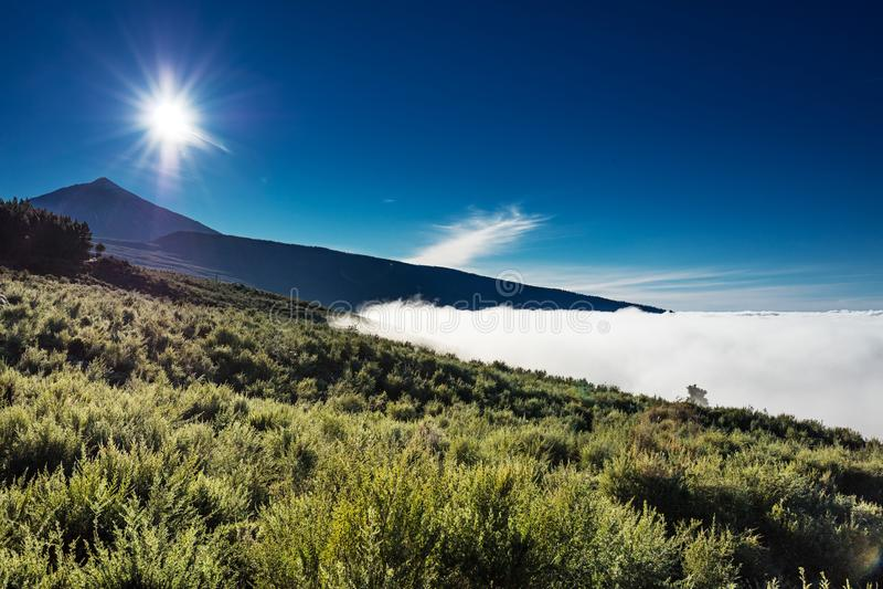 光环福雷斯塔尔自然公园,特内里费岛,加那利群岛-巨型的森林被安置在云彩上的一个高处, surroundin 库存图片