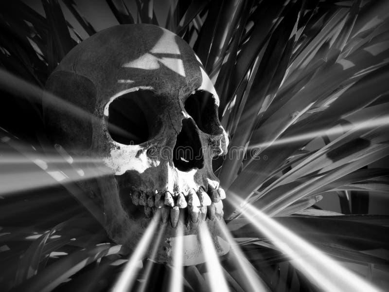 光的头骨 库存照片
