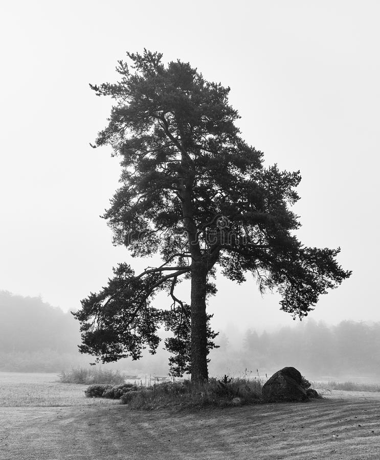 光秃的偏僻的树美术图象 免版税库存图片