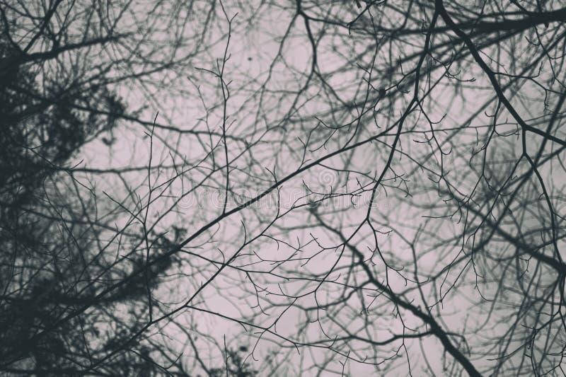 光秃的分支在冬天 免版税库存图片